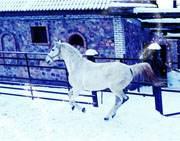 конный клуб Сказка