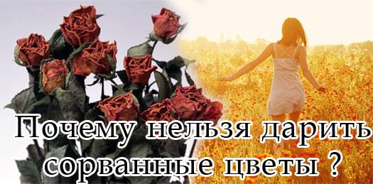Сорванный цветы нельзя дарить!